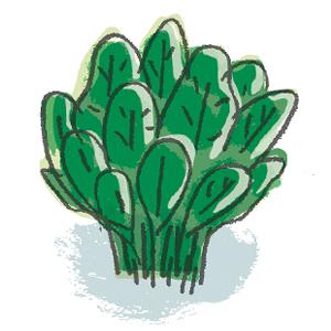 Espinacs